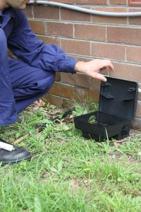 Pest Control Randwick NSW